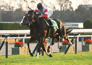 【馬コミュ】 第64回京阪杯 G3 レースの見どころ